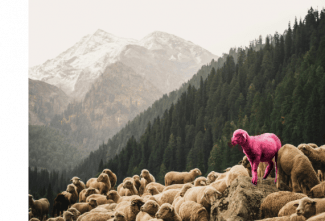 Stand out from the crowd - Photo by Dibya Jyoti Ghosh on Unsplash
