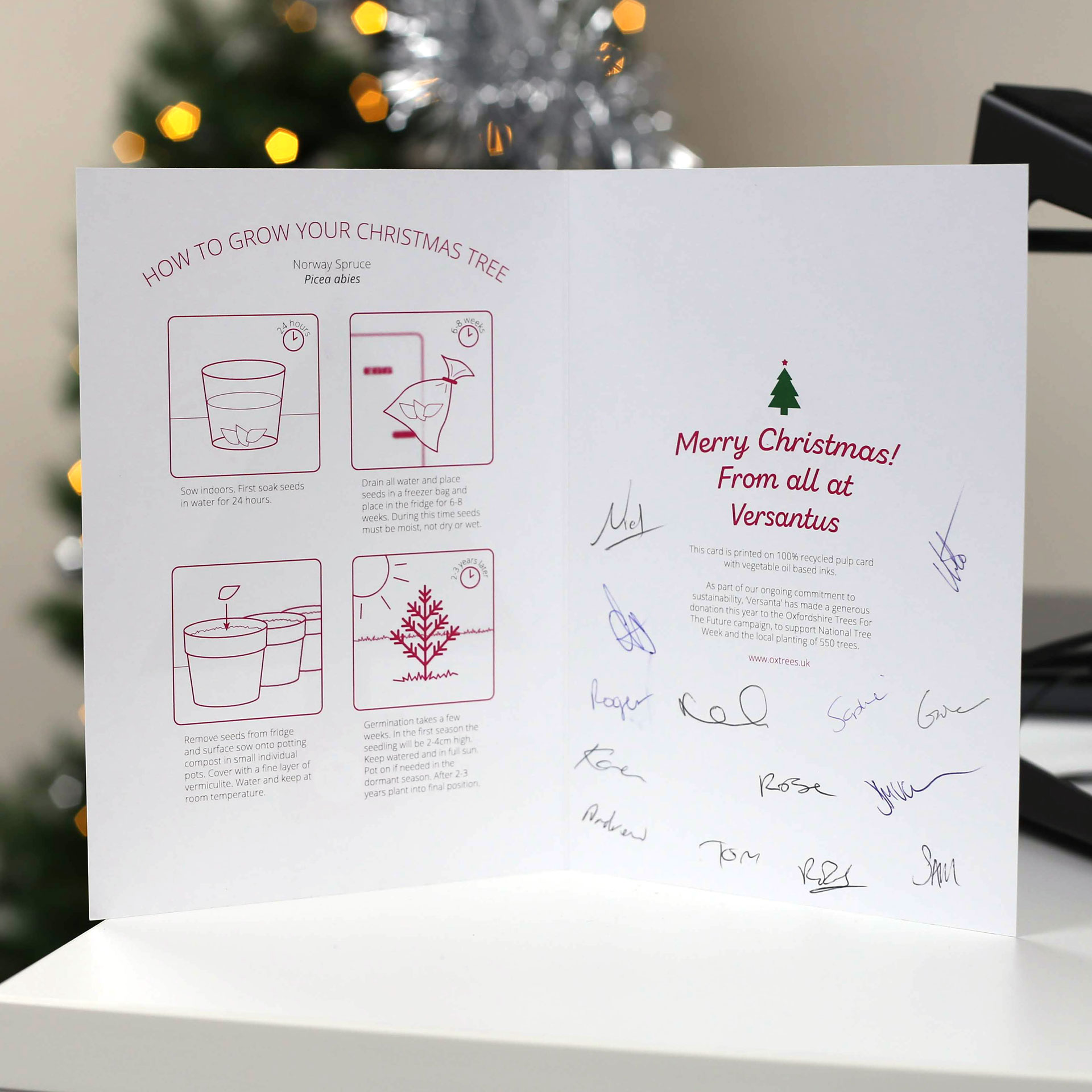 Plantable Christmas card - instructions and love